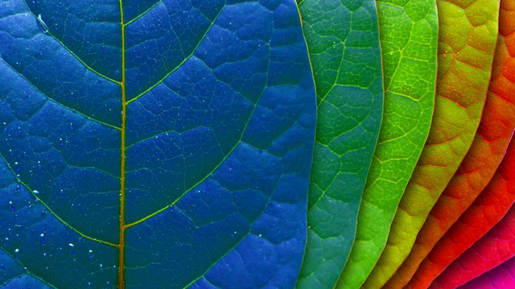 Resultado de imagem para imagens de cores
